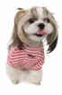 Ribbon Skully Stripey Puppy Shirt