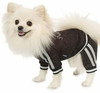 Stardust  Puppy Jogging Suit