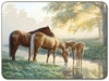 Horses Hard-backed Placemats