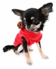 All Stars Dog Sweater - Red