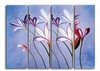 Stunning Canvas Art for your Walls