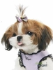 Puppy Grooming & Hair Accessories