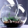Terrariums and Fish Bowls