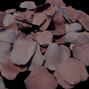 Cinnamon-Rose Rose Petals (100 Count) #39