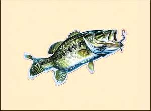 Car/Truck Magnet-Large Mouth Bass