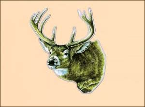 Car/Truck Magnet-Deer Head