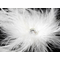 White Feather Bridal Fascinator