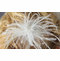 Wispy Feather Fascinator Hair Comb 6042