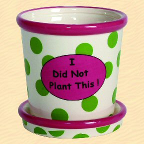 I Did Not Plant This! Tumbleweed Whimsical Planter