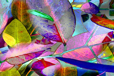 Vibrant Leaves by Patricia Stanton