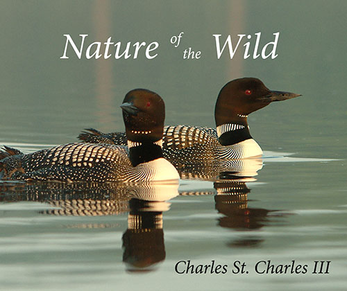 Nature of the Wild Volume 1
