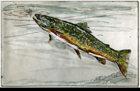 CROSSMAN:  BROOK TROUT