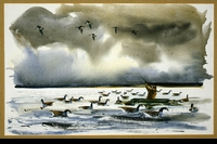 GOLDEN:  GOOSE HUNTING</a><br><b>- SOLD</b>