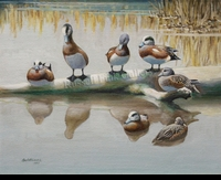 HINES:  WIGEON</a><br><b>- SOLD</b>