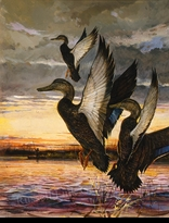 WEILER:  BLACK DUCKS</a><br><b>- SOLD</b>