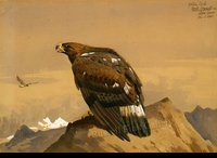 THORBURN:  GOLDEN EAGLE</a><br><b>- SOLD</b>