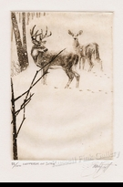 "SCOTT:  WHITETAIL IN SNOW</a><br><font color=""#ffffff""><b>- SOLD OUT</b></font>"