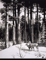 JAQUES:  WHITETAIL DEER IN WOODS</a><br><b>- SOLD</b>