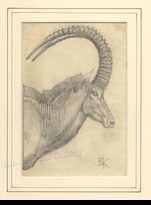 KUHN:  SABLE ANTELOPE SKETCH (1)</a><br><b>- SOLD</b>