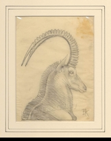 KUHN:  SABLE ANTELOPE SKETCH (2)