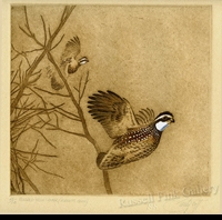 "SCOTT:  FLUSHED FROM COVER (Bobwhite Quail)<font color=""#ffffff"">"