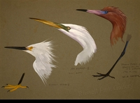 WEBER:  THREE EGRETS FIELD STUDY</a><br><b>- SOLD</b>