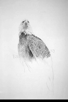 HARRIS-CHING:  EAGLE 2</a><br><b>- SOLD</b>