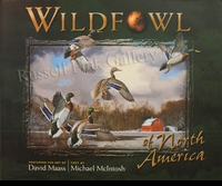 MAASS:  WILDFOWL OF NORTH AMERICA
