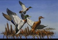 MAASS: 1977 MINNESOTA DUCK STAMP DESIGN</a><br><b>- SOLD</b>