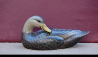 "KERR:  BLACK DUCK</a><br><font color=""#ffffff""><b>- SOLD</b></font>"