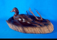 "SHARP:  DIVING DUCK</a><br><font color=""#ffffff""><b>- SOLD</b></font>"