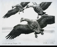 11 -- 1944 -- Weber -- White-Fronted Geese