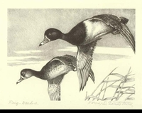 21 -- 1954 -- Sandstrom -- Ring-Necked Ducks