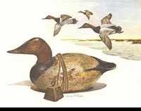 42 -- 1975 -- Fisher -- Canvasback  Decoy