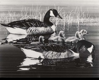 43 -- 1976 -- Magee -- Canada Geese