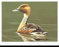 53 -- 1986 -- Moore -- Fulvous Whistling Duck