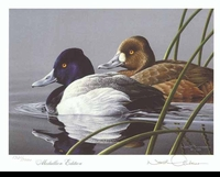 56 -- 1989 -- Anderson, Neal -- Lesser Scaup