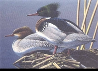 61 -- 1994 -- Anderson, Neal -- Red-Breasted Mergansers