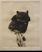 "McLEAN:  GREAT HORNED OWL<font color=""#ffffff"">"