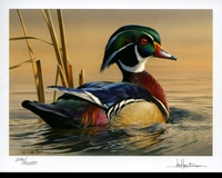 79 -- 2012 -- Hautman, Joe -- Wood Ducks