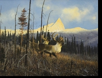 COLEMAN:  CARIBOU</a><br><b>- SOLD</b>