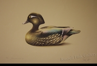 "SCOTT:  WOOD DUCK DECOY - HEN<font color=""#ffffff"">"