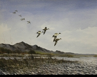 HAGERBAUMER: PINTAILS DROPPING IN</a><br><b>- SOLD<b/>