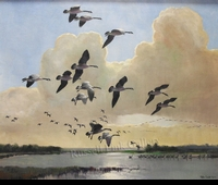 SCOTT: CANADA GEESE</a><br>- SOLD</b>