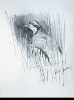 CROSSMAN:  CHUKAR PARTRIDGE SKETCH