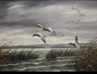 MAASS:  CANVASBACKS</a><br><b>- SOLD</b>