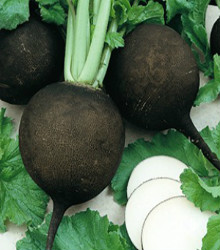 Radish - Round Black Spanish Seeds