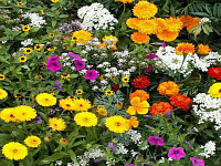 Grow! Don't Mow! Flowering Lawns & More
