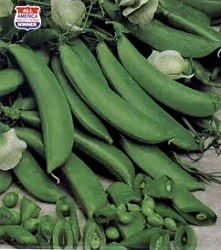 Sugar Snap Pole Peas - Edible Pod Seeds
