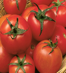Tomato Early Choice Seeds